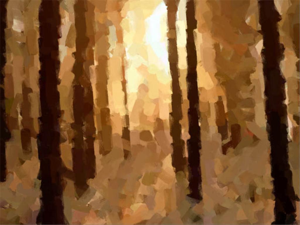 bosque1 (1024x768)