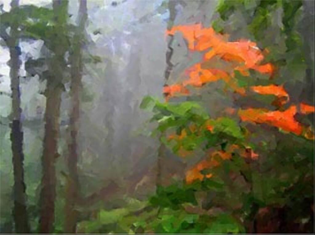 bosque2 (1024x768)